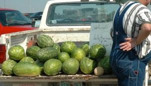 watermelon_truck